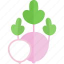 food, garden, radish, vegetables icon