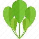 food, greenery, sheet, vegetables icon