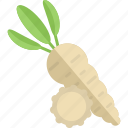 food, garden, horseradish, vegetables icon