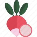 food, radish, sheet, vegetables icon