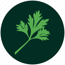 coriander, curry leaves, herb, leaf, leaves, organic, plant icon
