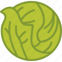 cabbage, food, vegetable, vegetables icon
