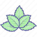 herb, leaf, mint, peppermint, spearmint icon