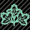 chinese parsley, coriander, coriandrum, fresh coriander, ingredient, sativum, vegetable icon