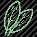 bay leaf, curry leaf, food, herb, vegetable icon