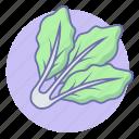 food, lettuce, vegetable icon