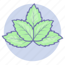 herb, herb leaf, mint, peppermint, vegetable icon