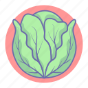 cabbage, food, salad, vegetable, vegetables icon