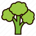 broccoli, dessert, food, healthy, vegetables