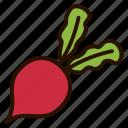 beet, food, plant, root, vegetables