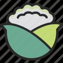 brassica, cabbage, cauliflower, vegetable icon
