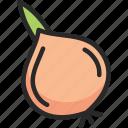 bulb, onion, shallot icon