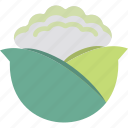 brassica, cabbage, cauliflower, vegetable icon