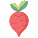beet, beetroot, radish icon