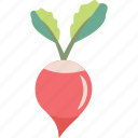 radish, root, turnip, vegetable icon