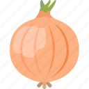 bulb, common, food, onion, vegetable, wild icon