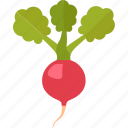 baby, european, radish, red, root, vegetable