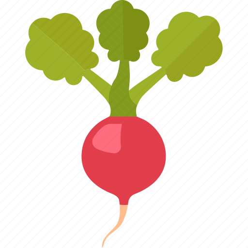 baby, european, radish, red, root, vegetable icon