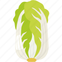 cabbage, chinese, leafy, napa, sui choy, vegetable, wombok icon