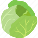 head, iceberg, leaf, leafy, lettuce, salad, vegetable icon