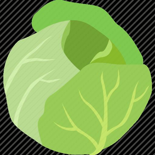 head, iceberg, leaf, leafy, lettuce, salad, vegetable icon