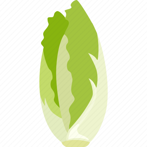 cos, green, leafy, lettuce, romaine, vegetable icon