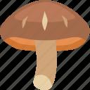 edible, japanese, mushroom, shitake, shitake mushroom icon