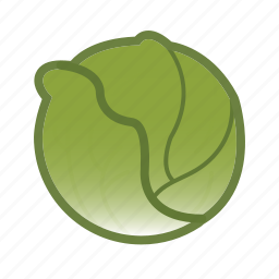 cabbage, lettuce, vegetable icon