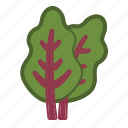 chard, salad, vegetable icon