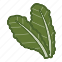kale, leaf, salad, vegan, vegetable icon