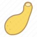 gourd, squash, vegetable, yellow icon