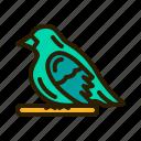 bird, animal, pet, fowl