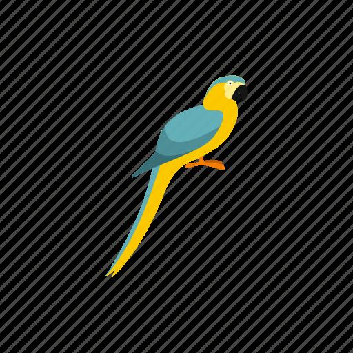 animal, beak, bird, feather, parrot, pet, tropical icon