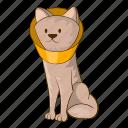 cone, funnel, vet, cat