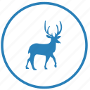 animal, deer, ecology, nature, trip, wild icon
