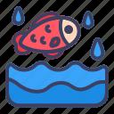 fish, water, daily, sea, animal, ocean