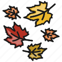 autumn, fall, leaves, weather