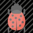 bug, insect, ladybird, malware, virus icon