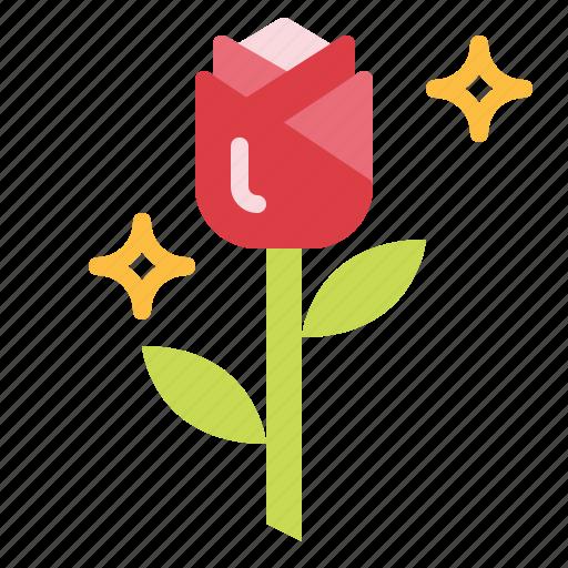 Blossom, botanical, flower, petals, rose icon - Download on Iconfinder