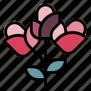 blossom, botanical, bouquet, flowers, nature