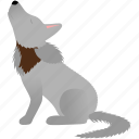 brown, dog, gray, wild, wolf icon