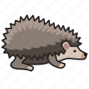 animal, hedgehog, wild, wild animal, zoo icon