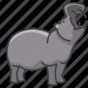 animal, hippopotamus, wild, wild animal, zoo icon