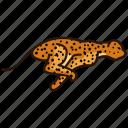 animal, felin, leopard, wild, wild animal, zoo icon