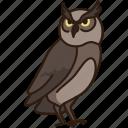 animal, bird, owl, wild, wild animal, zoo icon