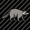 animal, raccoon, wild, wild animal, zoo icon
