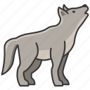 animal, wild, wild animal, wolf, zoo icon