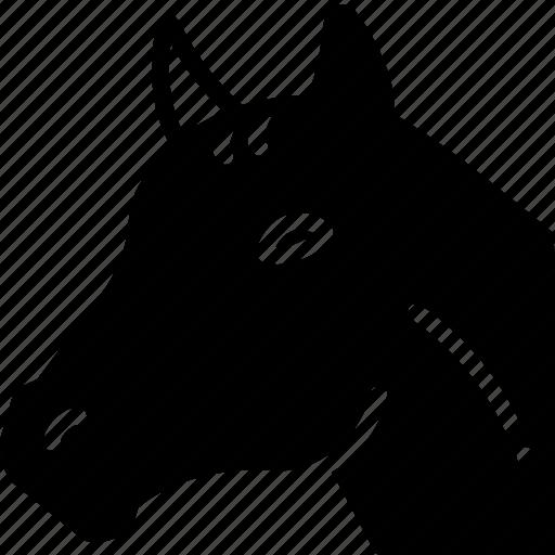animal, face, horse icon