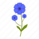 cornflower, flowers, garden, gardening, leaf, plant, wildflowers icon