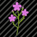 flowers, garden, gardening, leaf, plant, wildflowers